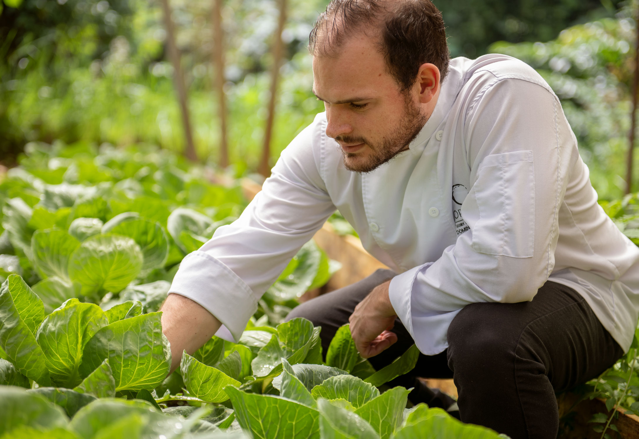 ORIGINS-CHEF-IN-GARDEN-3Web